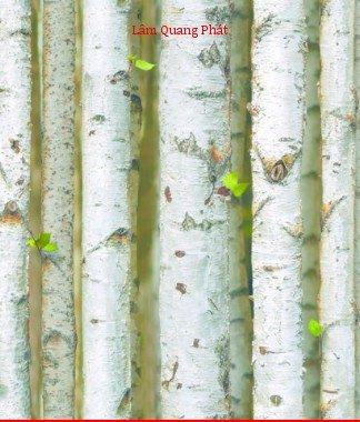 Hình ảnh Giấy dán tường Natural 87009-2