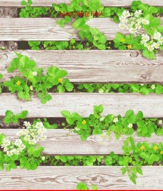 Hình ảnh Giấy dán tường Natural 87020-1