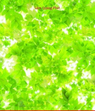 Hình ảnh Giấy dán tường Natural 87036-1